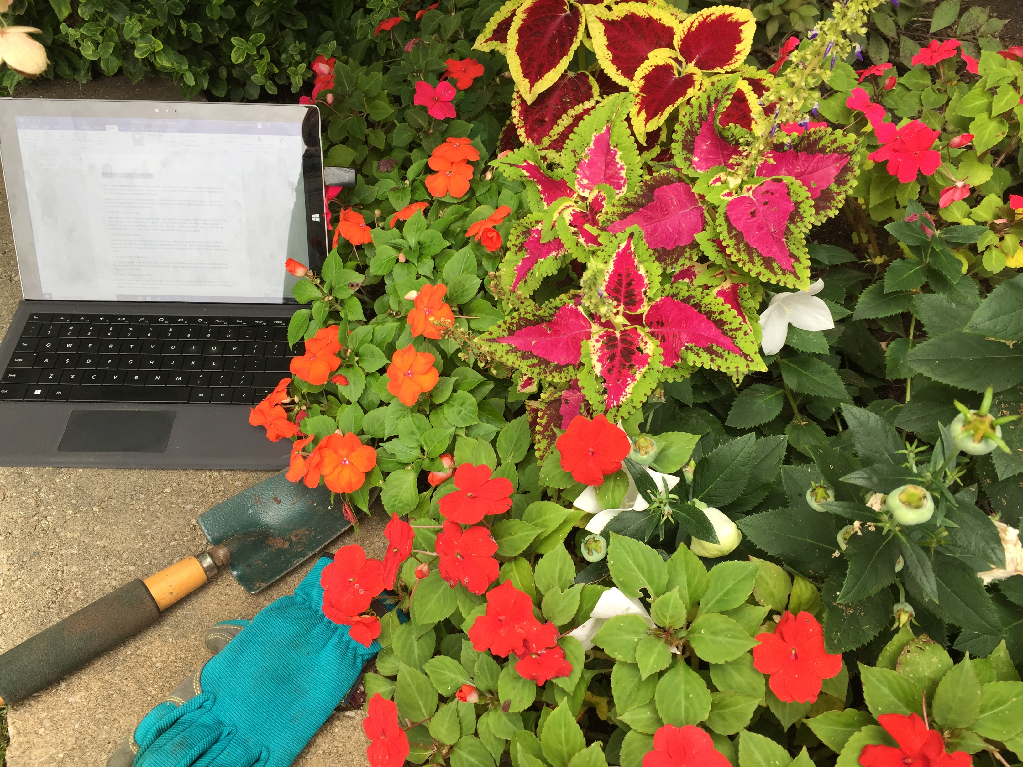 laptop and garden tools next to flowering plants